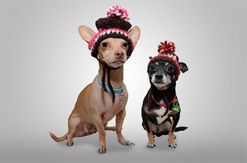 dog-hats