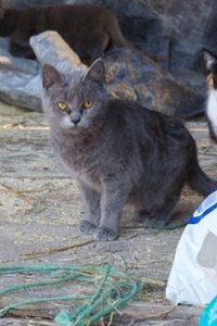 barn cat2
